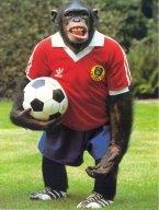 [Image: FootballChimp.jpg]